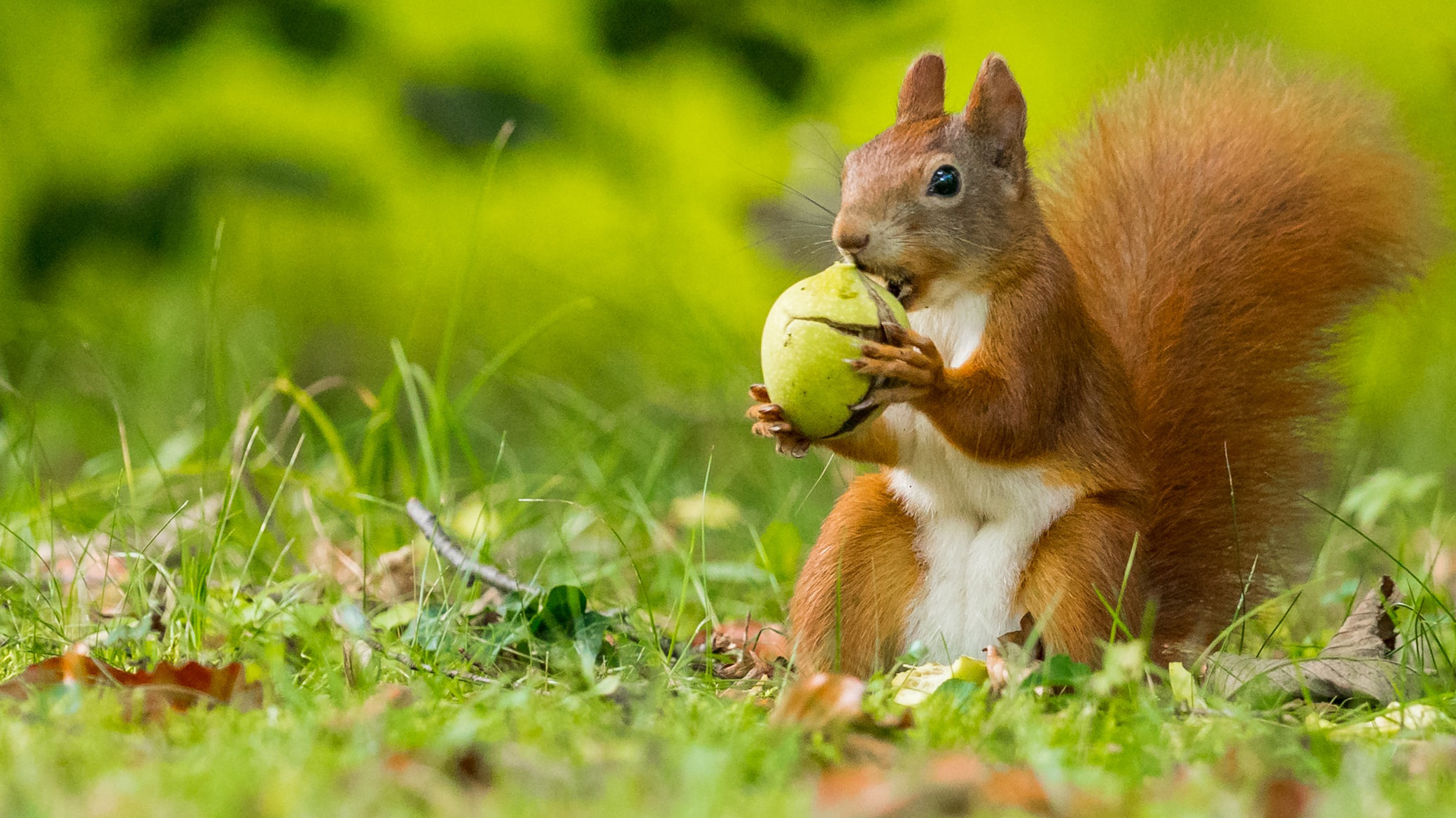 A squirrel holding a nut in the Czech Republic